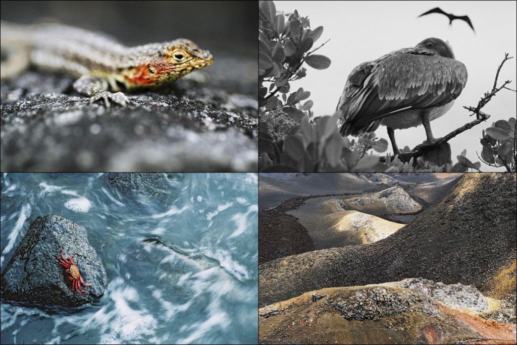 Galapagos Foto: JohnMagnusson