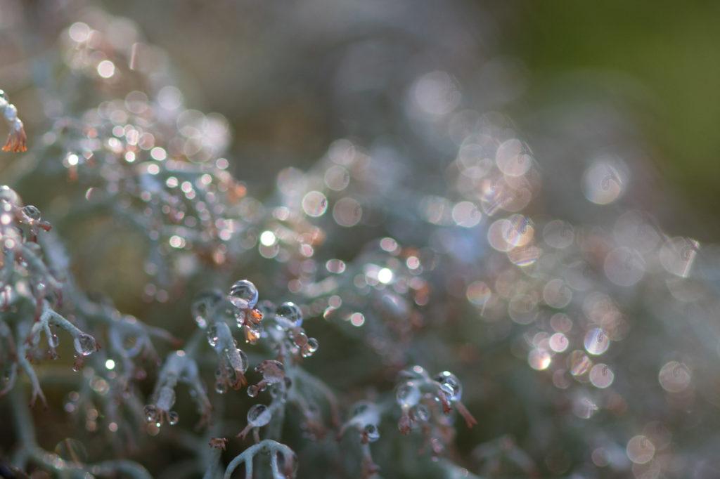 Foto: Ann-Marie Johansson - Droppens mysterium