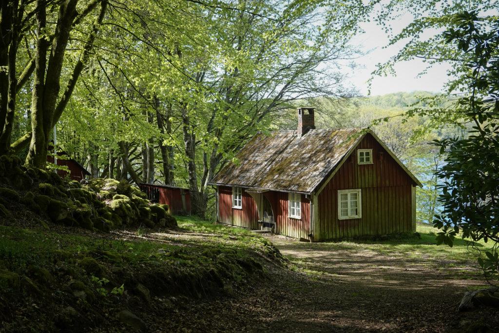 Foto: Berith Gudmundsson - Stuga i bokskogen