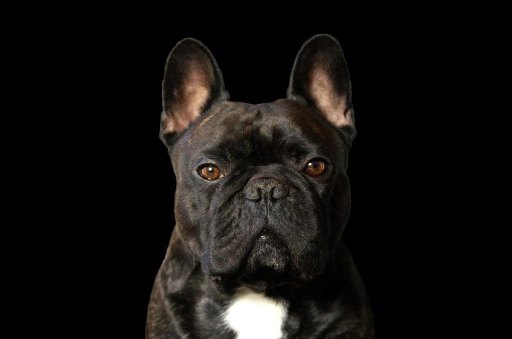 Foto: Stina Hallberg - Dog in black